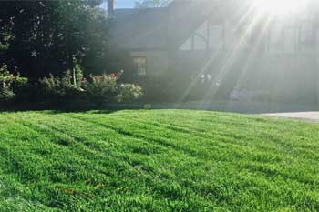Cary, NC home with a professionally mowed and maintained lawn.