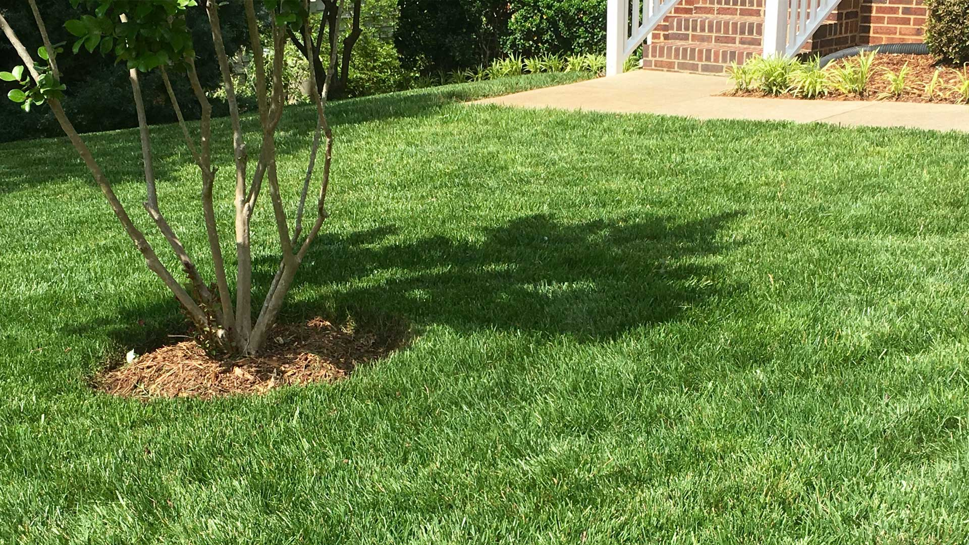 Residential yard in Apex, NC after lawn cleanup services