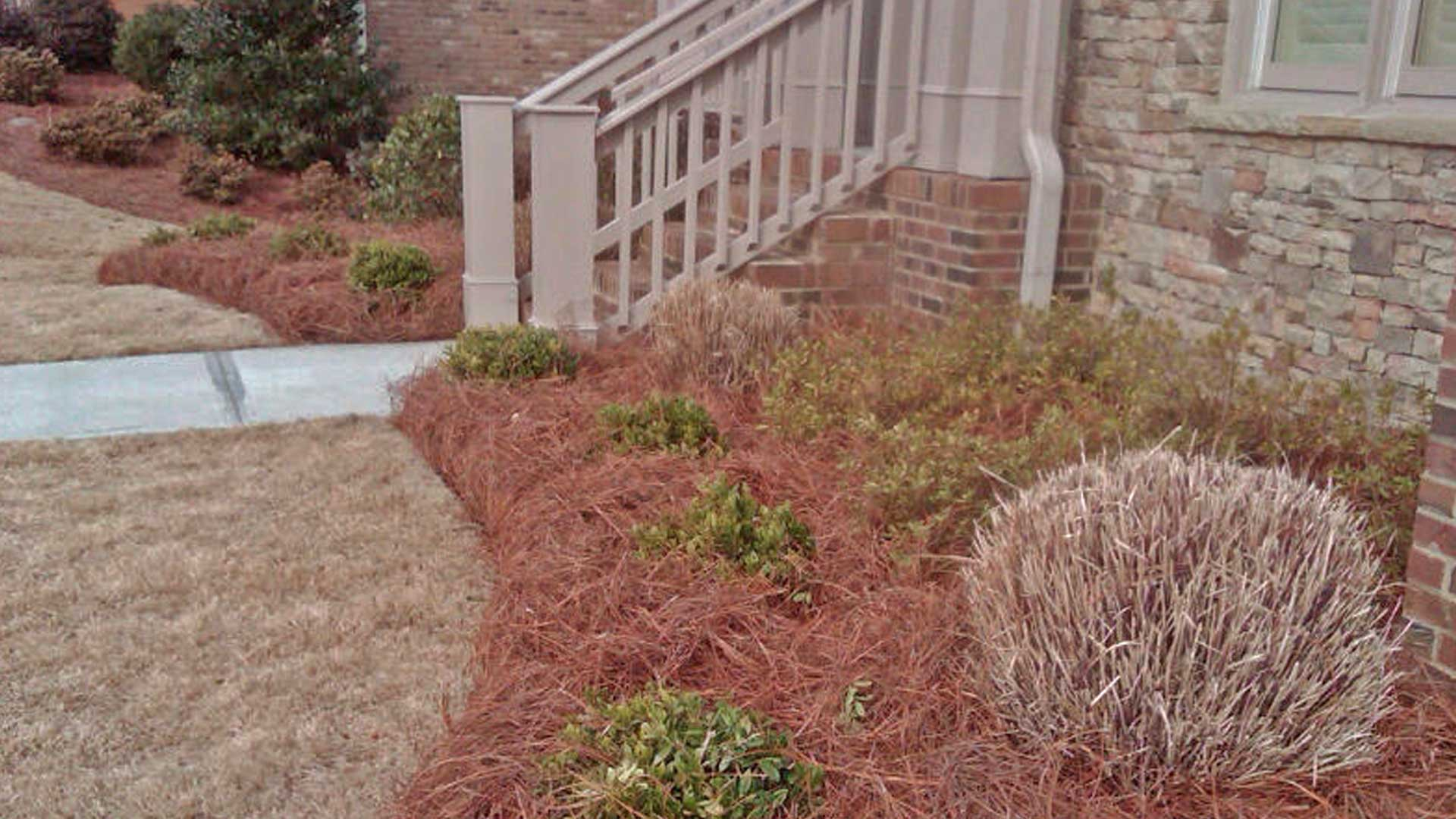 Landscape bed with fresh pine straw.