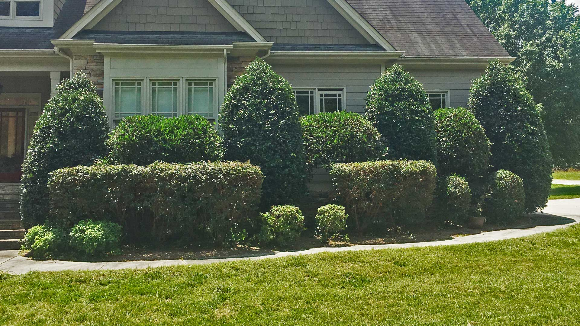 Homeowner in Cary, NC with lawn care service from Wake Landscapes.