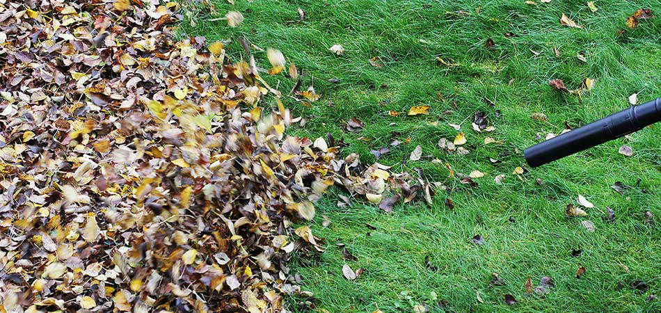 Failing to Cleanup Fall Leaves in Your Yard Can Be a Slow Death Sentence for Your Lawn