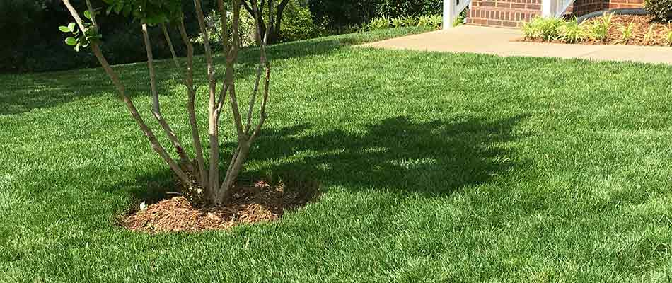 Aeration: A Lesser Known Way to Grow a Thicker, Healthier Lawn