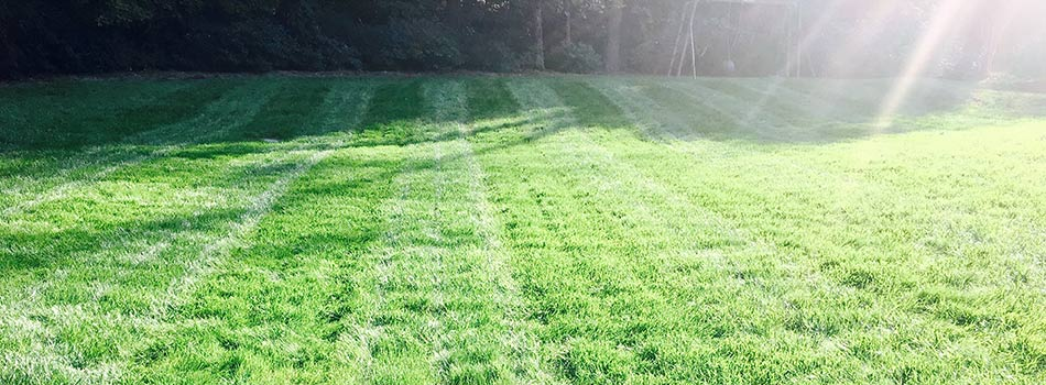 Dark green yard in Cary, NC, fertilized and maintained by Wake Landscapes.