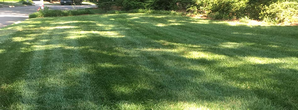 Yard after core aeration and overseeding by Wake Landscapes in Morrisville, NC.