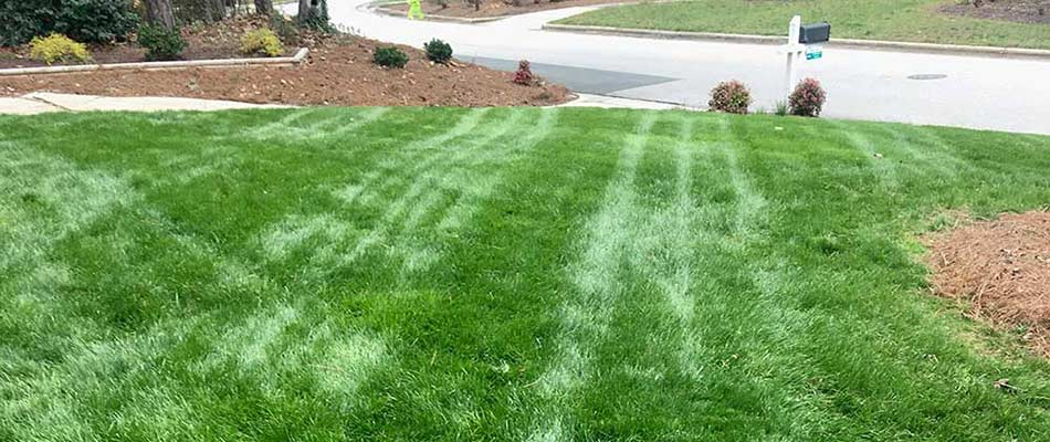 Freshly cut, thick, green lawn with mulch around bush in Cary, NC yard.