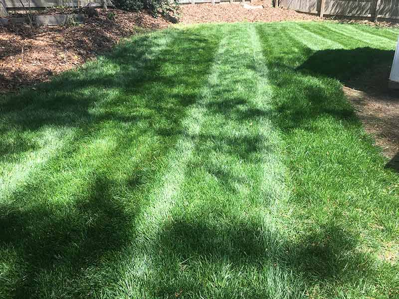 /files/account/images/gallery-back-yard-with-dark-green-striped-grass.jpg