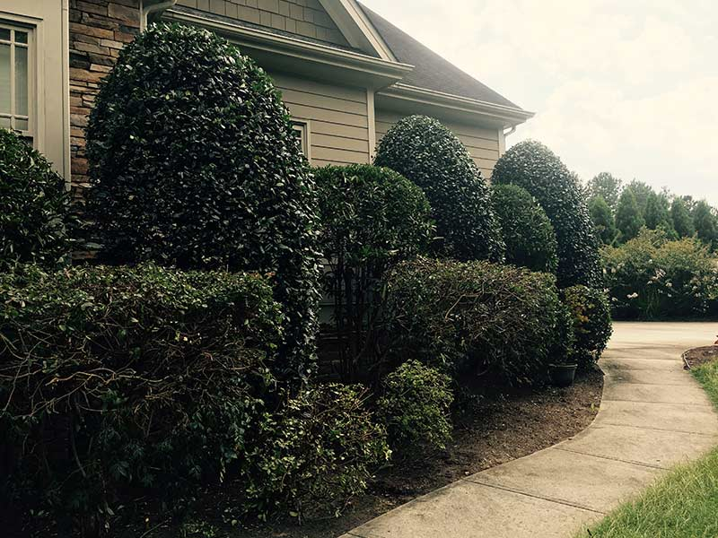 /files/account/images/gallery-front-yard-with-freshly-pruned-bushes.jpg