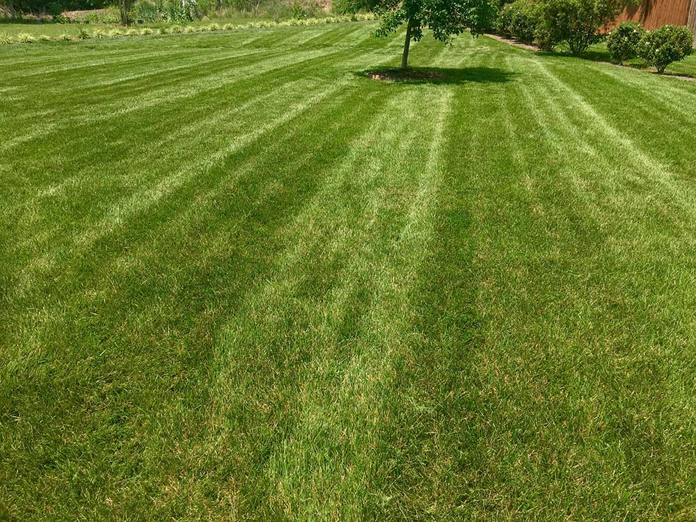 /files/account/images/gallery-large-yard-mowed-grass.jpg