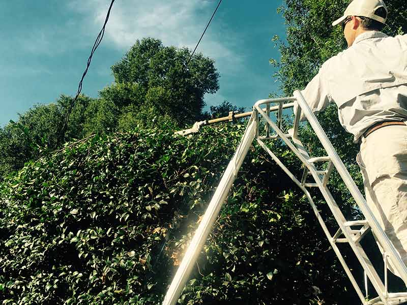 /files/account/images/gallery-tree-trimming-technician-on-ladder.jpg