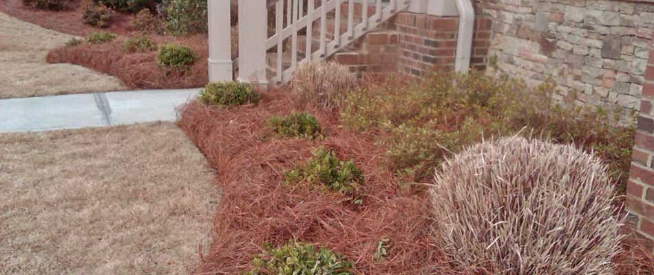 New mulch in a landscaping bed in front of a home in Morrisville, NC.