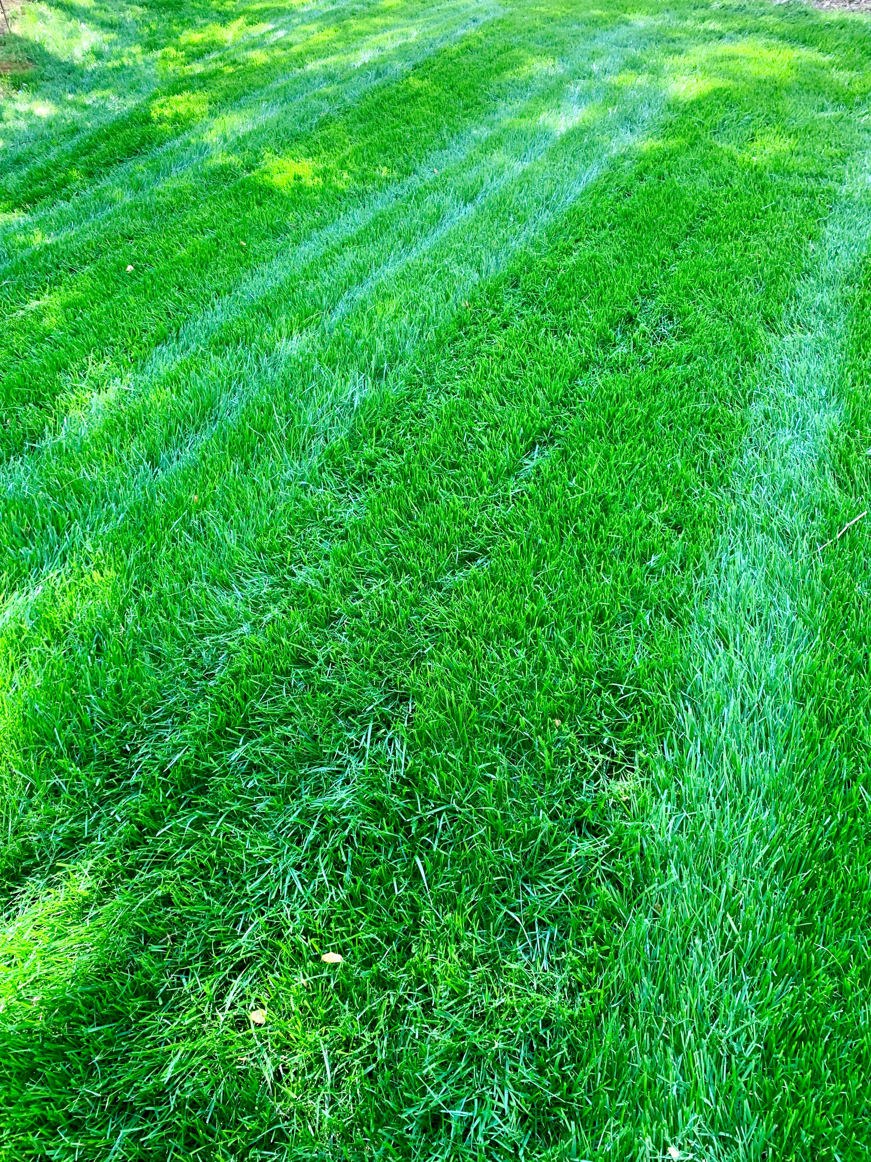 /files/lawn-maintenance-cary-nc.jpg